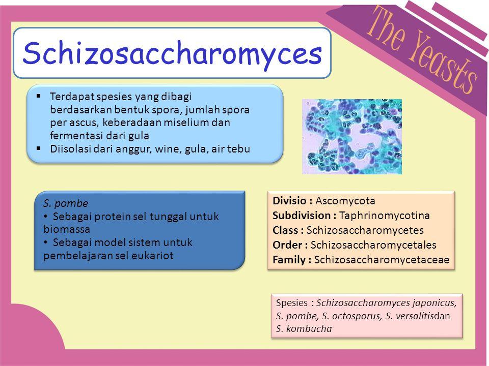 Schizosaccharomyces Divisio : Ascomycota Subdivision : Taphrinomycotina Class : Schizosaccharomycetes Order : Schizosaccharomycetales Family : Schizos