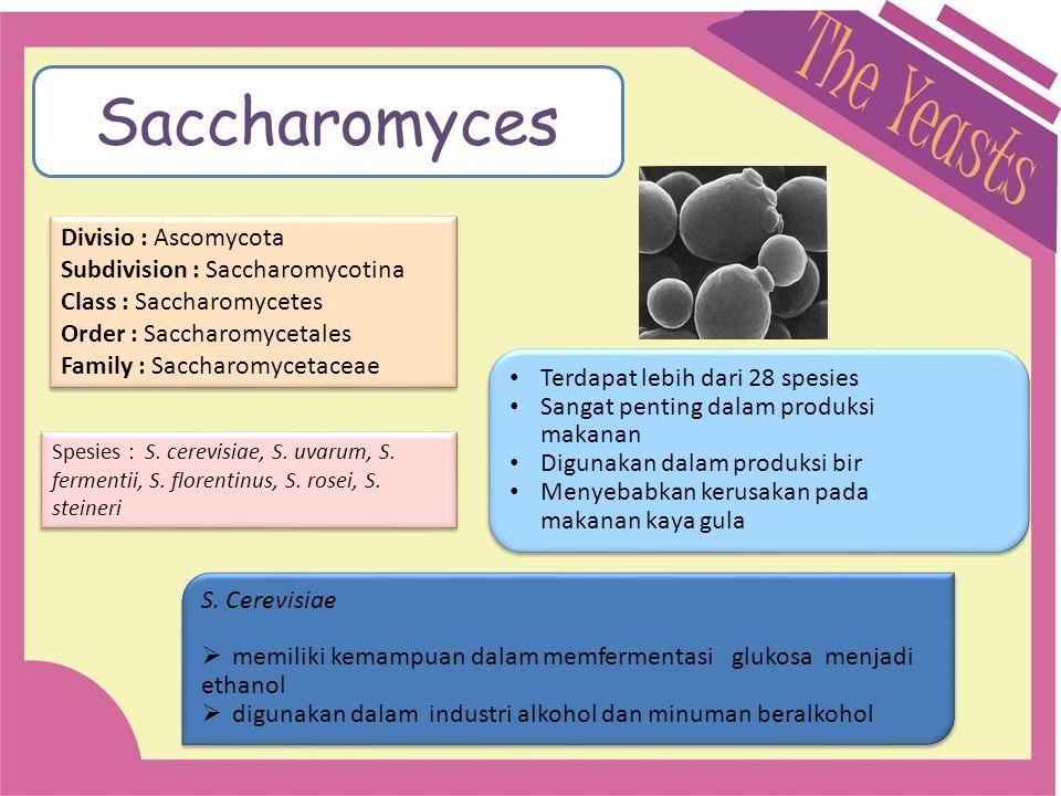 Divisio : Ascomycota Subdivision : Saccharomycotina Class : Saccharomycetes Order : Saccharomycetales Family : Saccharomycetaceae Divisio : Ascomycota