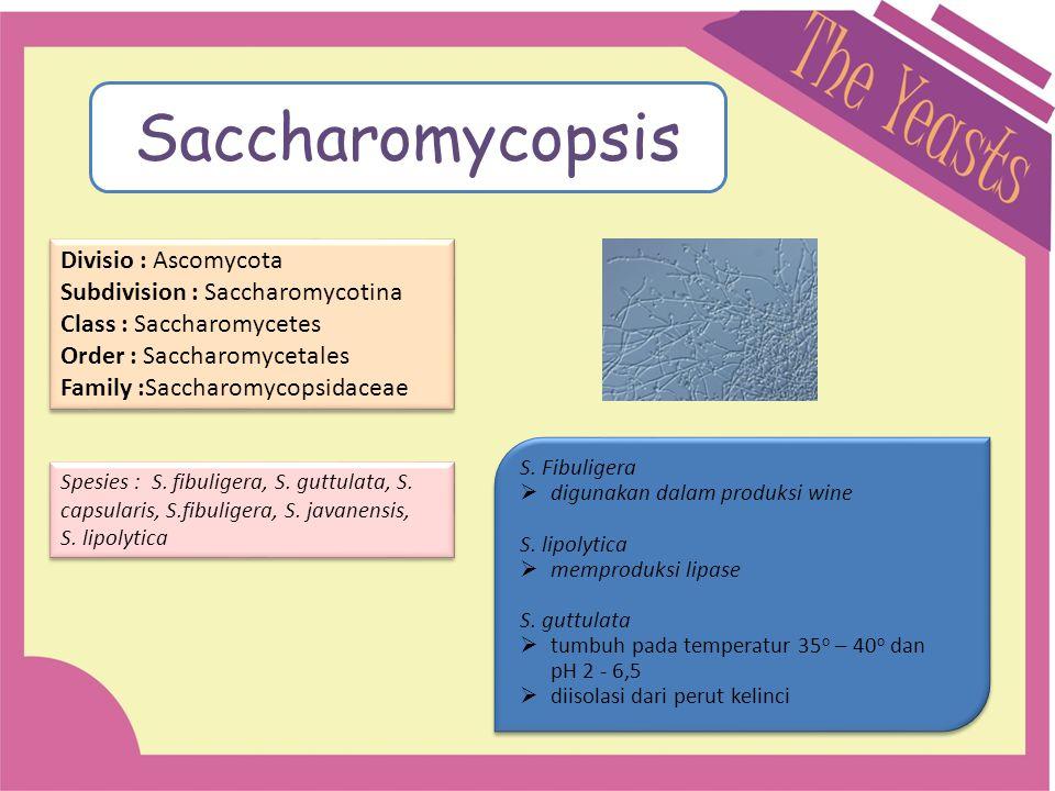 Divisio : Ascomycota Subdivision : Saccharomycotina Class : Saccharomycetes Order : Saccharomycetales Family :Saccharomycopsidaceae Divisio : Ascomyco