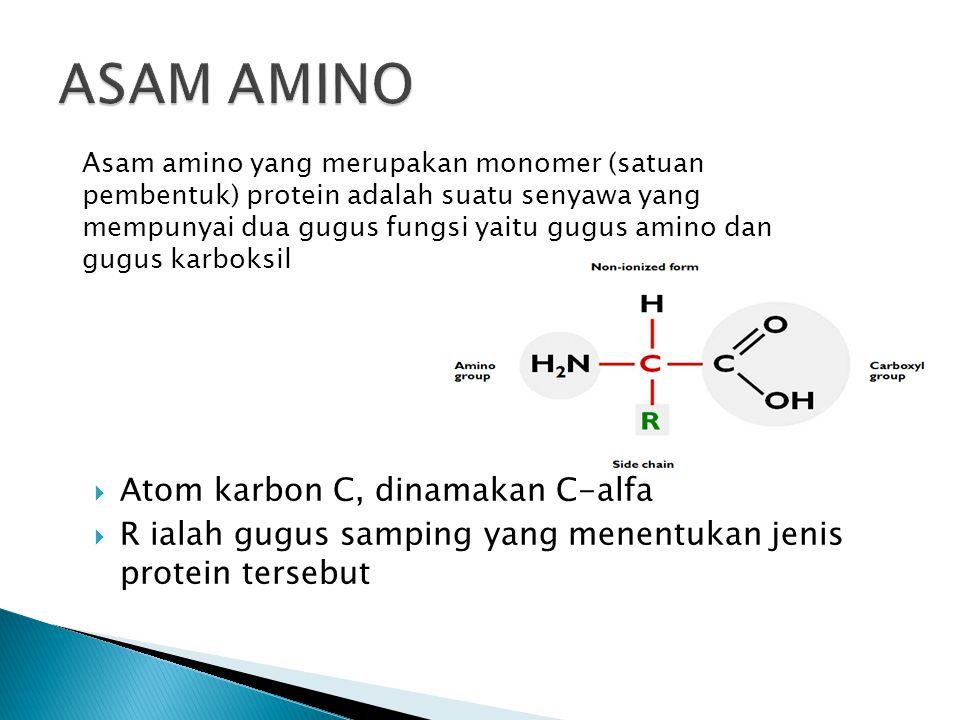  Atom karbon C, dinamakan C-alfa  R ialah gugus samping yang menentukan jenis protein tersebut Asam amino yang merupakan monomer (satuan pembentuk) protein adalah suatu senyawa yang mempunyai dua gugus fungsi yaitu gugus amino dan gugus karboksil