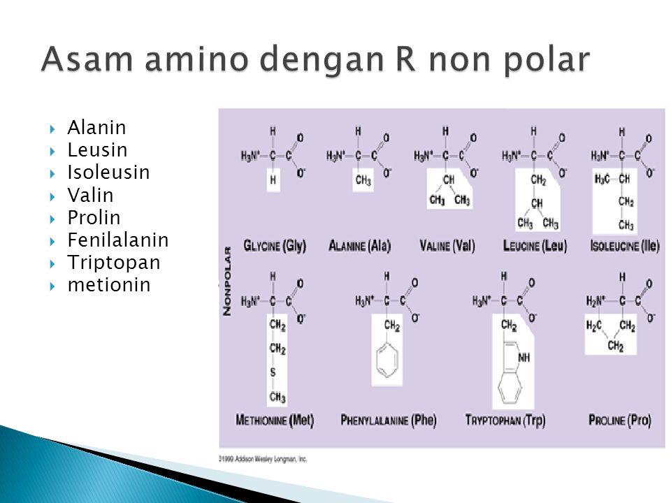  Alanin  Leusin  Isoleusin  Valin  Prolin  Fenilalanin  Triptopan  metionin