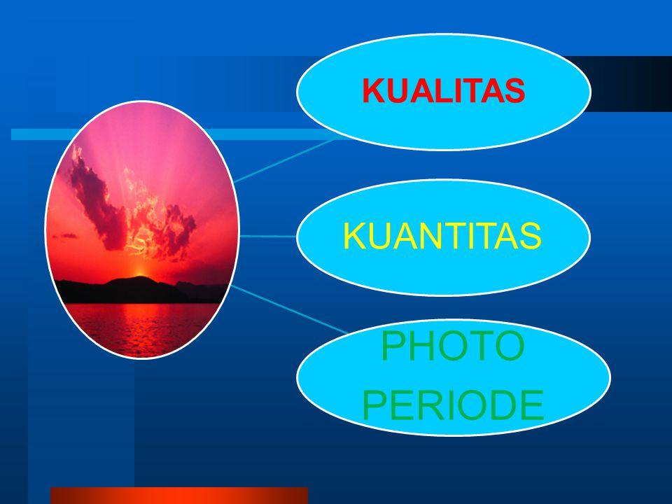 KUALITAS KUANTITAS PHOTO PERIODE