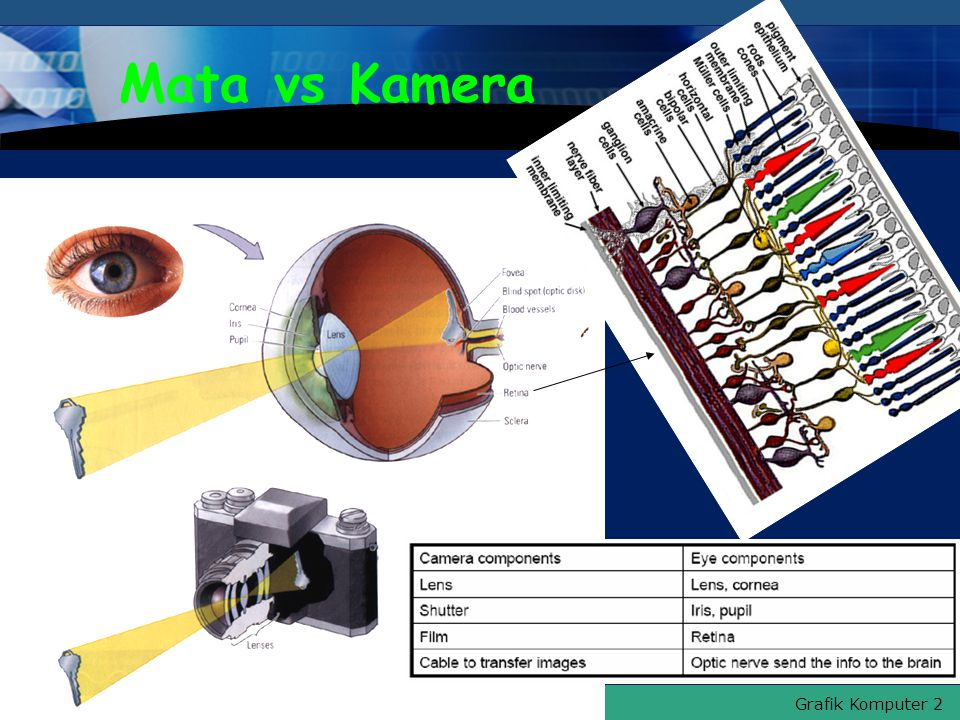 Grafik Komputer 2 Hal.: 11Isikan Judul Halaman Mata vs Kamera