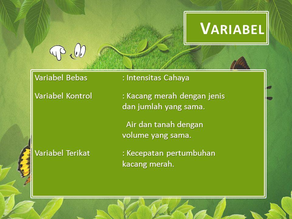 V ARIABEL Variabel Bebas : Intensitas Cahaya Variabel Kontrol: Kacang merah dengan jenis dan jumlah yang sama.