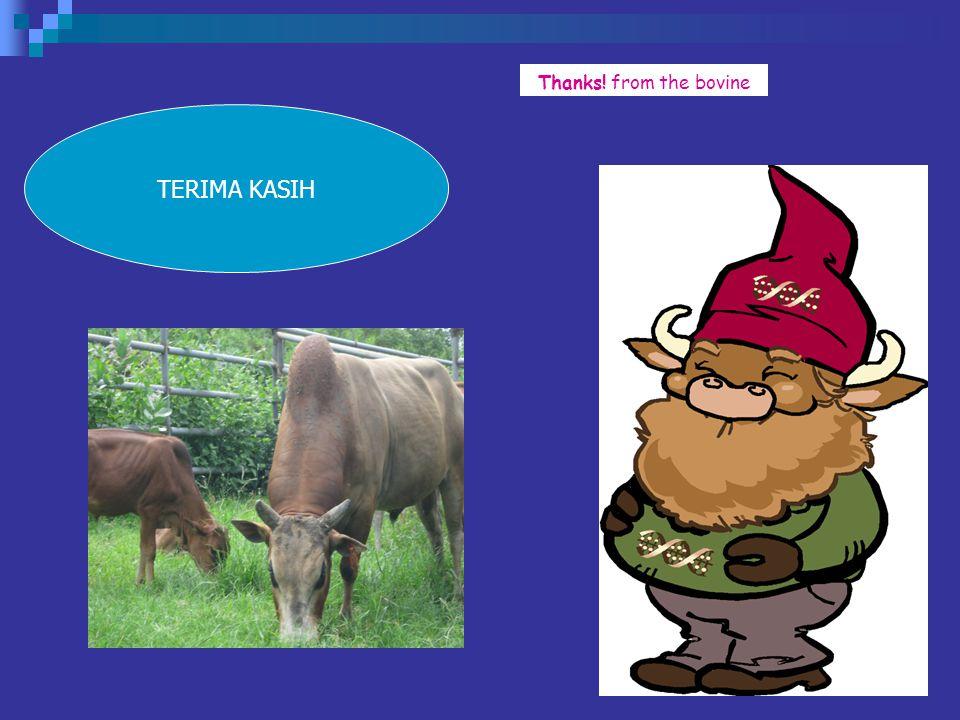 Thanks! from the bovine TERIMA KASIH