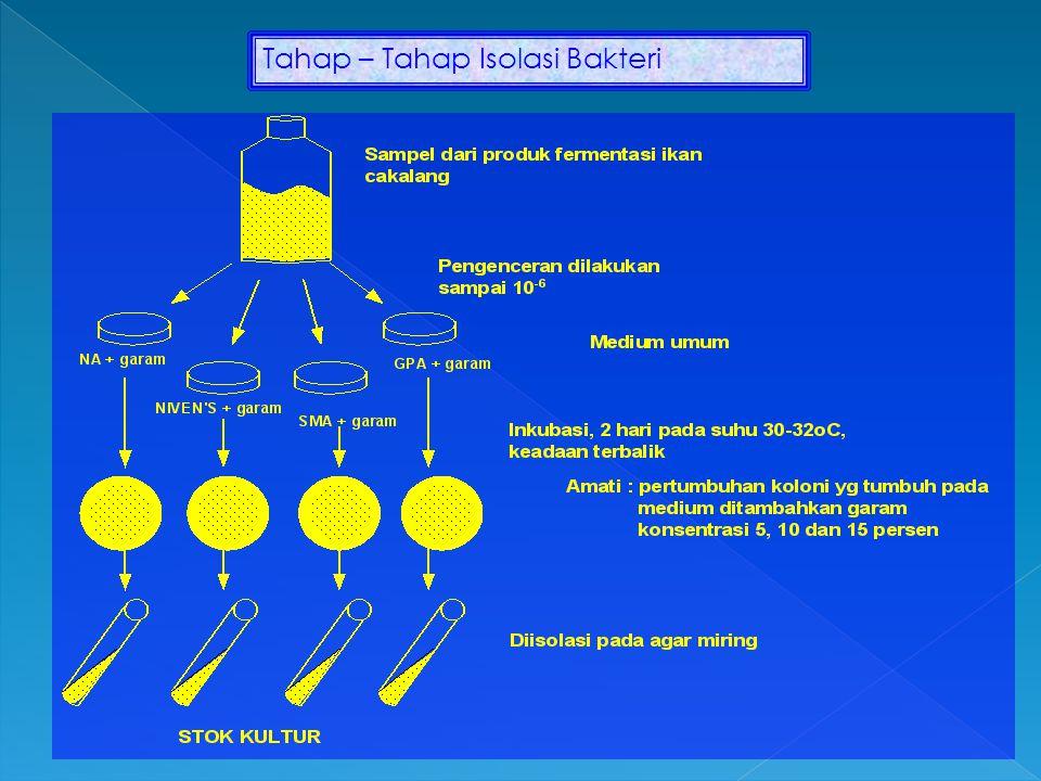 Tahap – Tahap Isolasi Bakteri