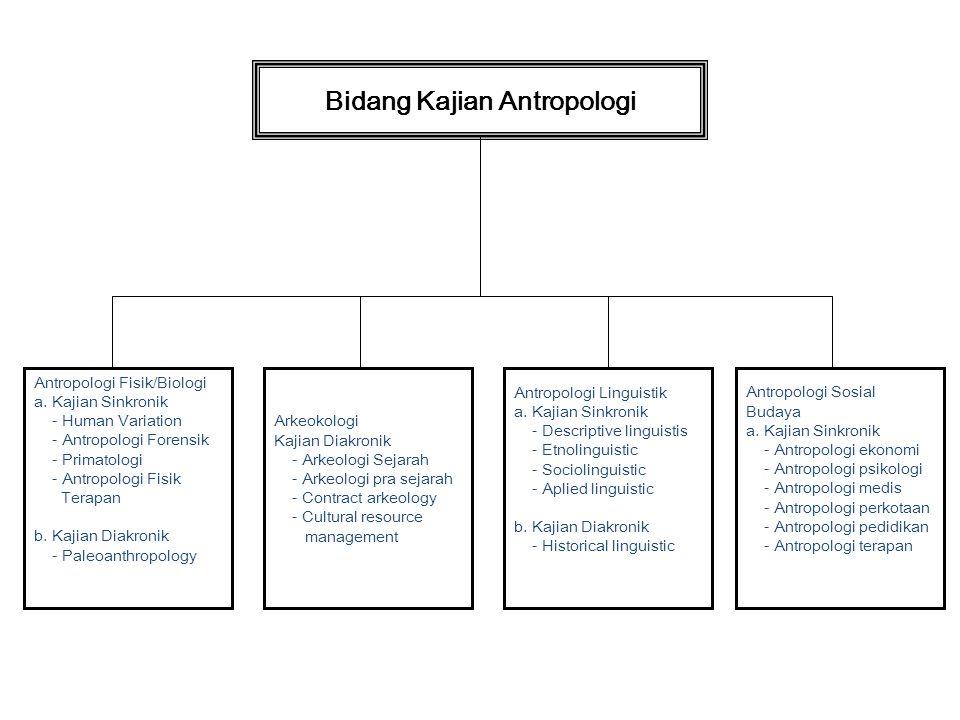 Bidang Kajian Antropologi Antropologi Fisik/Biologi a. Kajian Sinkronik - Human Variation - Antropologi Forensik - Primatologi - Antropologi Fisik Ter