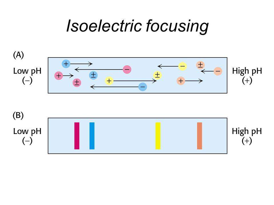 Isoelectric focusing