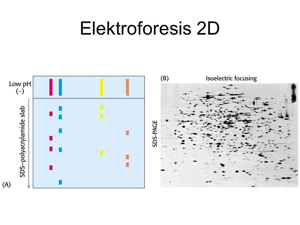 Elektroforesis 2D