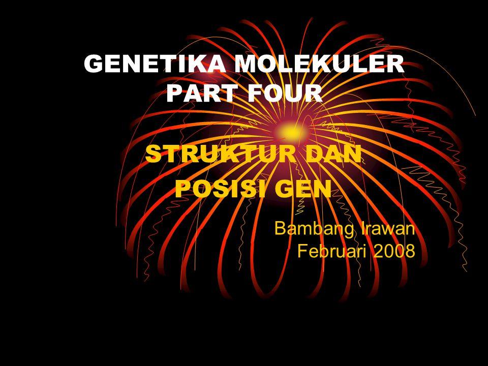GENETIKA MOLEKULER PART FOUR STRUKTUR DAN POSISI GEN Bambang Irawan Februari 2008