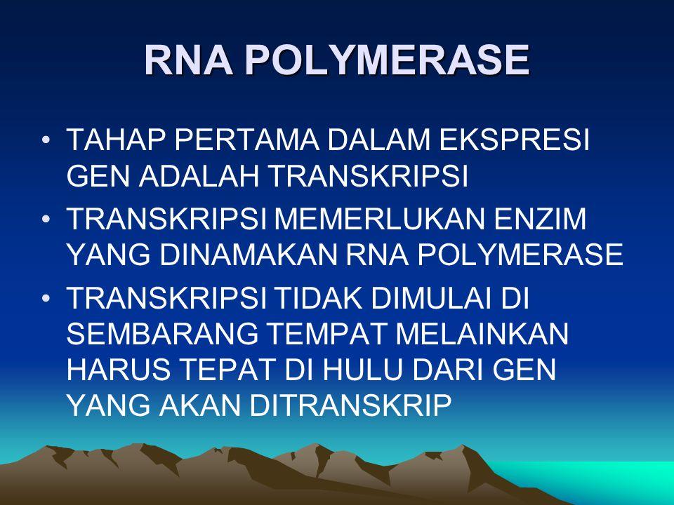 RNA POLYMERASE TAHAP PERTAMA DALAM EKSPRESI GEN ADALAH TRANSKRIPSI TRANSKRIPSI MEMERLUKAN ENZIM YANG DINAMAKAN RNA POLYMERASE TRANSKRIPSI TIDAK DIMULA
