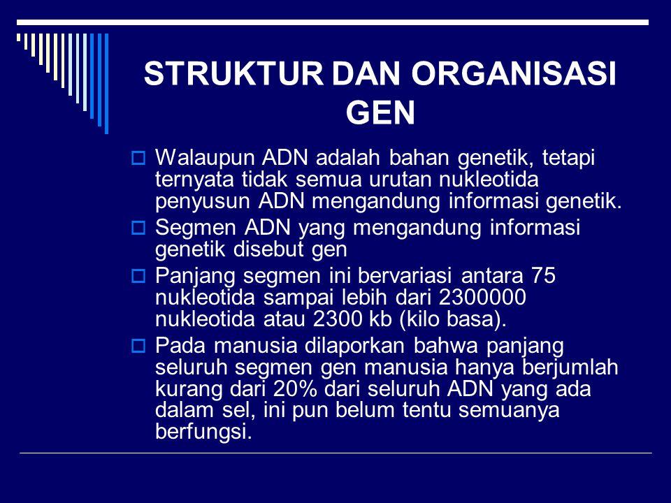 STRUKTUR DAN ORGANISASI GEN  Walaupun ADN adalah bahan genetik, tetapi ternyata tidak semua urutan nukleotida penyusun ADN mengandung informasi genet