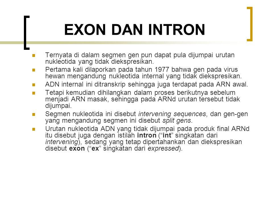 EXON DAN INTRON Ternyata di dalam segmen gen pun dapat pula dijumpai urutan nukleotida yang tidak diekspresikan. Pertama kali dilaporkan pada tahun 19