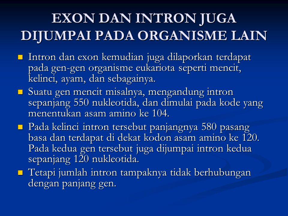 EXON DAN INTRON JUGA DIJUMPAI PADA ORGANISME LAIN Intron dan exon kemudian juga dilaporkan terdapat pada gen-gen organisme eukariota seperti mencit, k