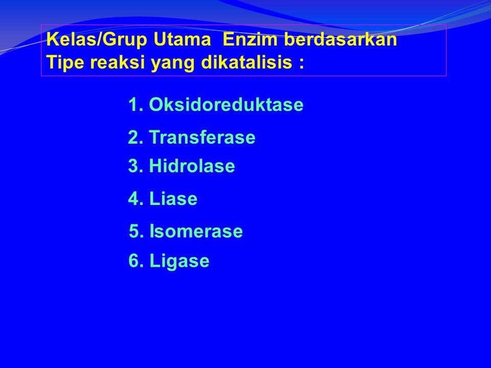 Kelas/Grup Utama Enzim berdasarkan Tipe reaksi yang dikatalisis : 1.