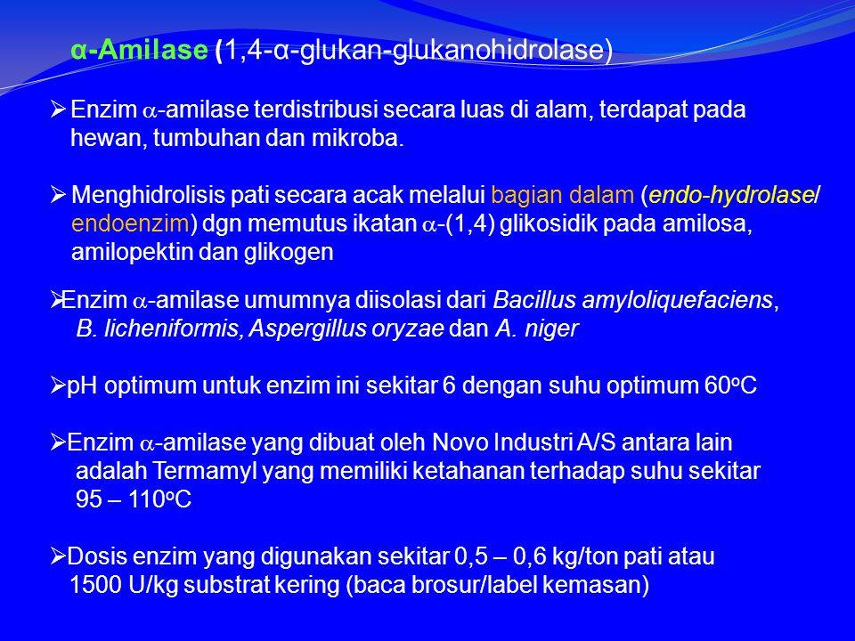 α-Amilase ( 1,4-α-glukan-glukanohidrolase)  Enzim  -amilase terdistribusi secara luas di alam, terdapat pada hewan, tumbuhan dan mikroba.