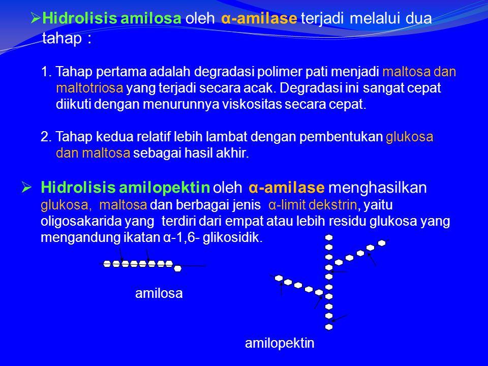  Hidrolisis amilosa oleh α-amilase terjadi melalui dua tahap : 1.