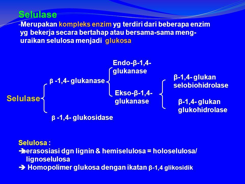 Selulase -Merupakan kompleks enzim yg terdiri dari beberapa enzim yg bekerja secara bertahap atau bersama-sama meng- uraikan selulosa menjadi glukosa Selulase β -1,4- glukanase β -1,4- glukosidase Endo-β-1,4- glukanase Ekso-β-1,4- glukanase β-1,4- glukan selobiohidrolase β-1,4- glukan glukohidrolase Selulosa :  berasosiasi dgn lignin & hemiselulosa = holoselulosa/ lignoselulosa  Homopolimer glukosa dengan ikatan β-1,4 glikosidik