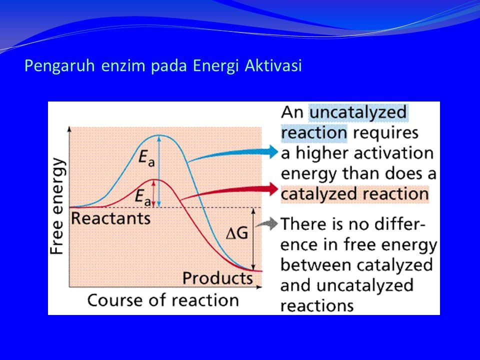 Pengaruh enzim pada Energi Aktivasi