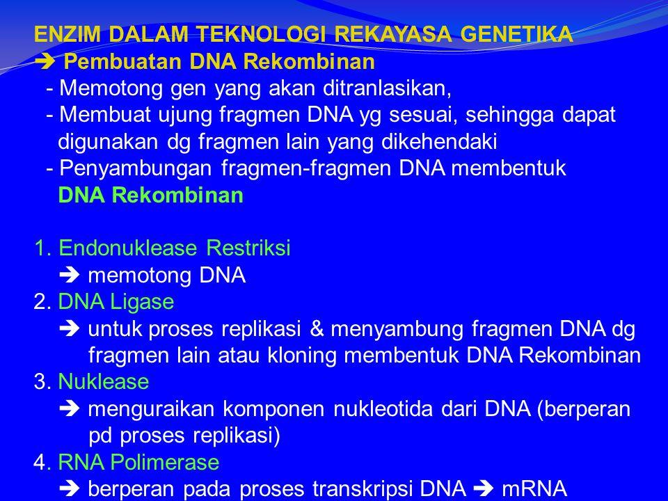 ENZIM DALAM TEKNOLOGI REKAYASA GENETIKA  Pembuatan DNA Rekombinan - Memotong gen yang akan ditranlasikan, - Membuat ujung fragmen DNA yg sesuai, sehingga dapat digunakan dg fragmen lain yang dikehendaki - Penyambungan fragmen-fragmen DNA membentuk DNA Rekombinan 1.Endonuklease Restriksi  memotong DNA 2.
