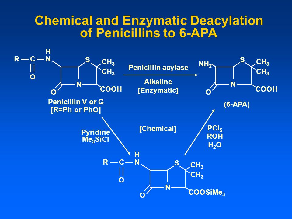 Chemical and Enzymatic Deacylation of Penicillins to 6-APA CH 3 RCN H O N O SS O N COOH Penicillin V or G NH 2 CH 3 COOH (6-APA) Penicillin acylase Al