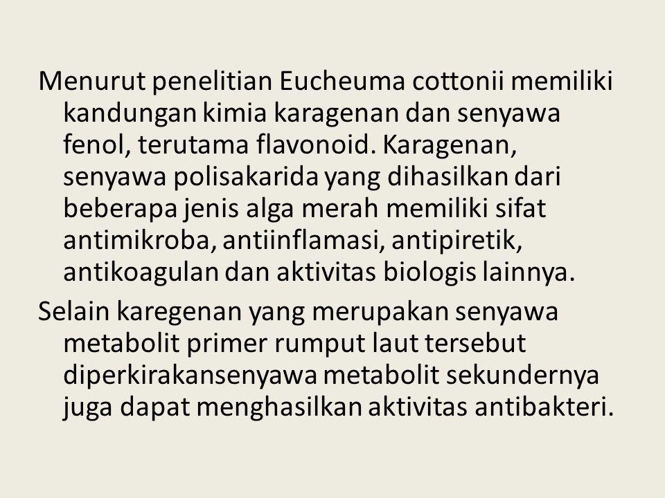 Menurut penelitian Eucheuma cottonii memiliki kandungan kimia karagenan dan senyawa fenol, terutama flavonoid. Karagenan, senyawa polisakarida yang di