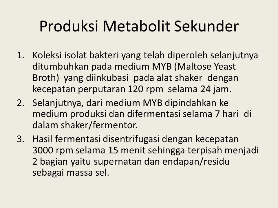 Produksi Metabolit Sekunder 1.Koleksi isolat bakteri yang telah diperoleh selanjutnya ditumbuhkan pada medium MYB (Maltose Yeast Broth) yang diinkubas