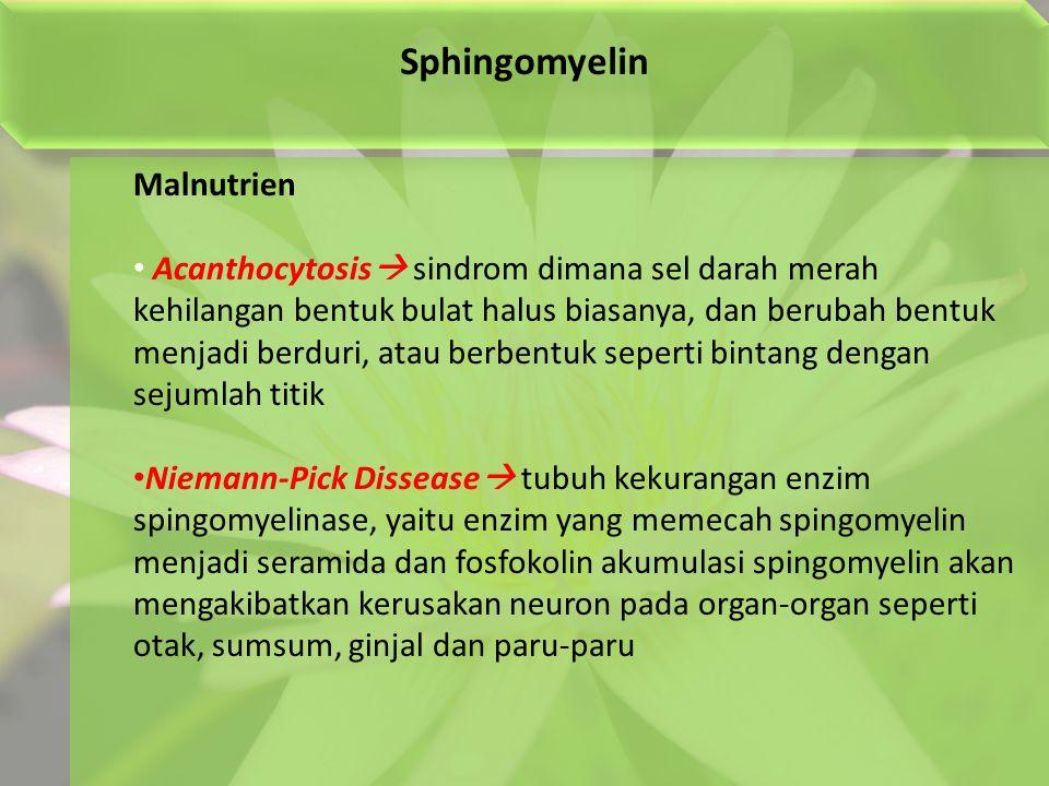 Sphingomyelin Malnutrien Acanthocytosis  sindrom dimana sel darah merah kehilangan bentuk bulat halus biasanya, dan berubah bentuk menjadi berduri, atau berbentuk seperti bintang dengan sejumlah titik Niemann-Pick Dissease  tubuh kekurangan enzim spingomyelinase, yaitu enzim yang memecah spingomyelin menjadi seramida dan fosfokolin akumulasi spingomyelin akan mengakibatkan kerusakan neuron pada organ-organ seperti otak, sumsum, ginjal dan paru-paru