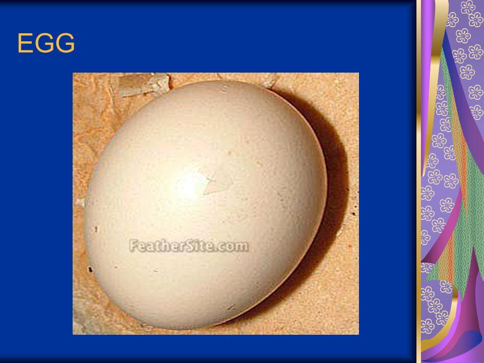 EGG STRUCTURE & COMPOSITION 1.Egg yolk 2.Albumen (white egg) 3.Shell membrane 4.Egg Shell