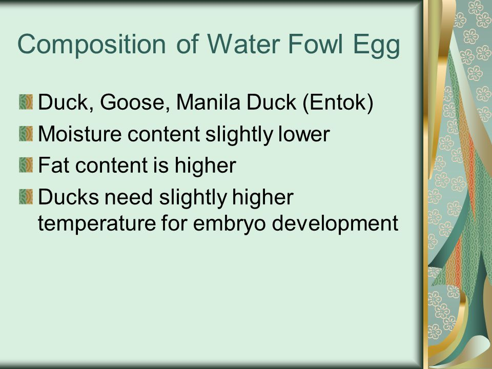 Composition of Water Fowl Egg Duck, Goose, Manila Duck (Entok) Moisture content slightly lower Fat content is higher Ducks need slightly higher temperature for embryo development