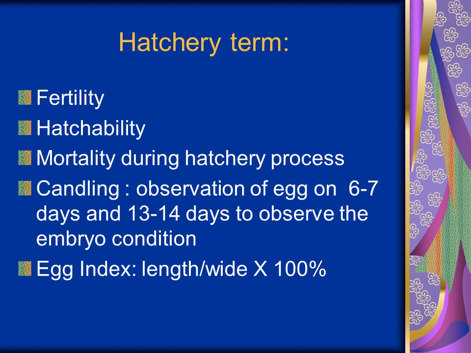 Hatchery term: Fertility Hatchability Mortality during hatchery process Candling : observation of egg on 6-7 days and 13-14 days to observe the embryo