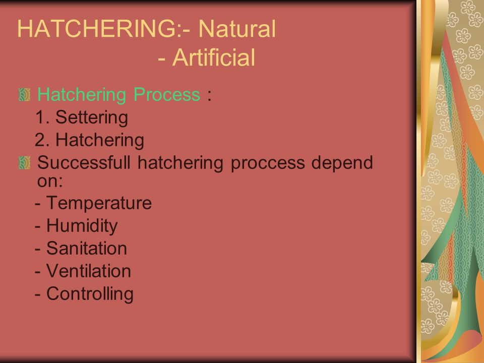 HATCHERING:- Natural - Artificial Hatchering Process : 1. Settering 2. Hatchering Successfull hatchering proccess depend on: - Temperature - Humidity