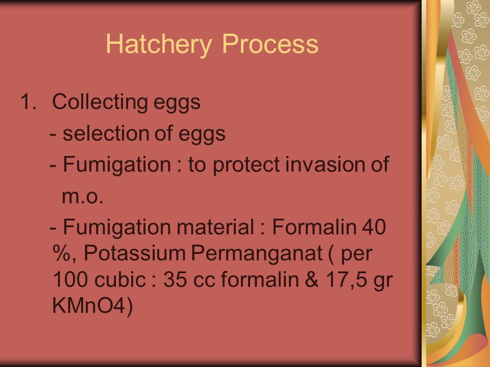 Hatchery Process 1.Collecting eggs - selection of eggs - Fumigation : to protect invasion of m.o. - Fumigation material : Formalin 40 %, Potassium Per