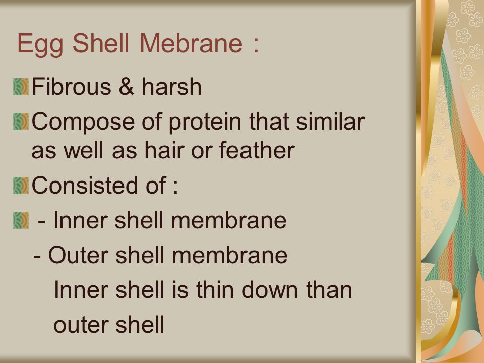Egg Shell Mebrane : Fibrous & harsh Compose of protein that similar as well as hair or feather Consisted of : - Inner shell membrane - Outer shell mem