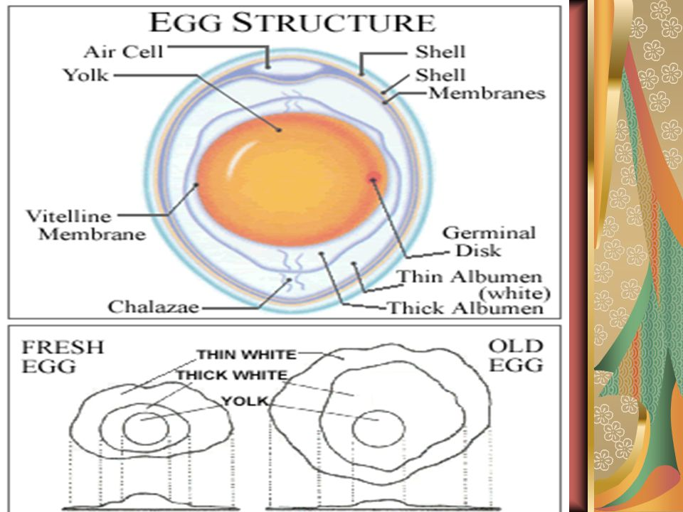 Hatchery term: Fertility Hatchability Mortality during hatchery process Candling : observation of egg on 6-7 days and 13-14 days to observe the embryo condition Egg Index: length/wide X 100%