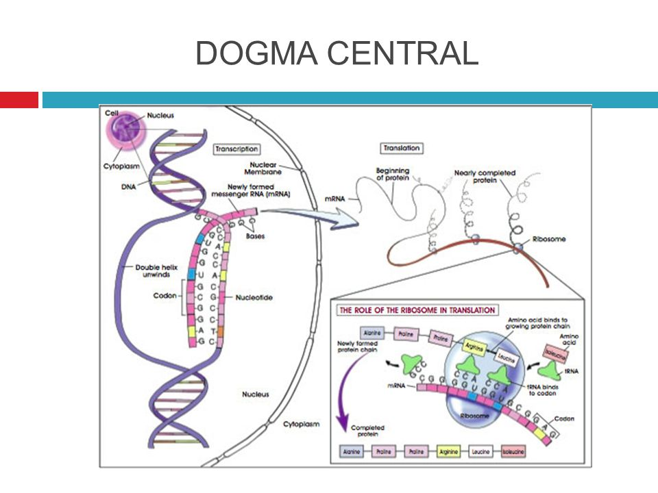 DOGMA CENTRAL