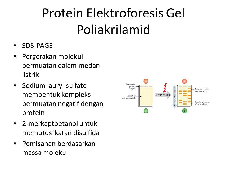 Protein Elektroforesis Gel Poliakrilamid SDS-PAGE Pergerakan molekul bermuatan dalam medan listrik Sodium lauryl sulfate membentuk kompleks bermuatan negatif dengan protein 2-merkaptoetanol untuk memutus ikatan disulfida Pemisahan berdasarkan massa molekul