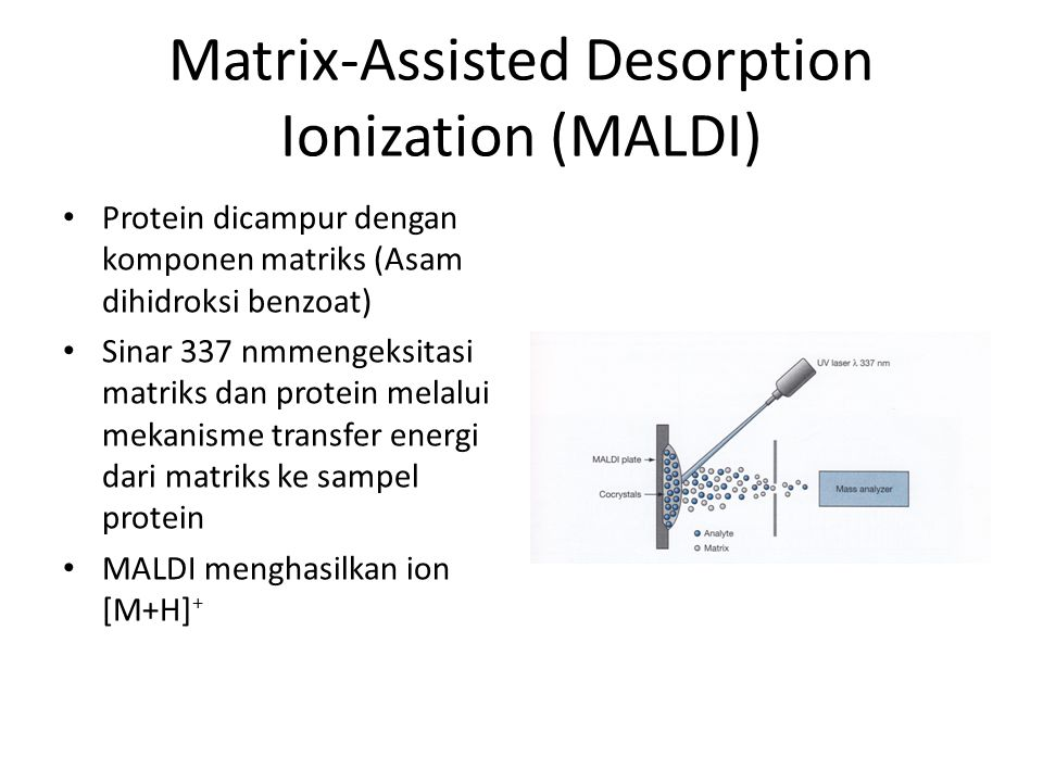 Matrix-Assisted Desorption Ionization (MALDI) Protein dicampur dengan komponen matriks (Asam dihidroksi benzoat) Sinar 337 nmmengeksitasi matriks dan protein melalui mekanisme transfer energi dari matriks ke sampel protein MALDI menghasilkan ion [M+H] +
