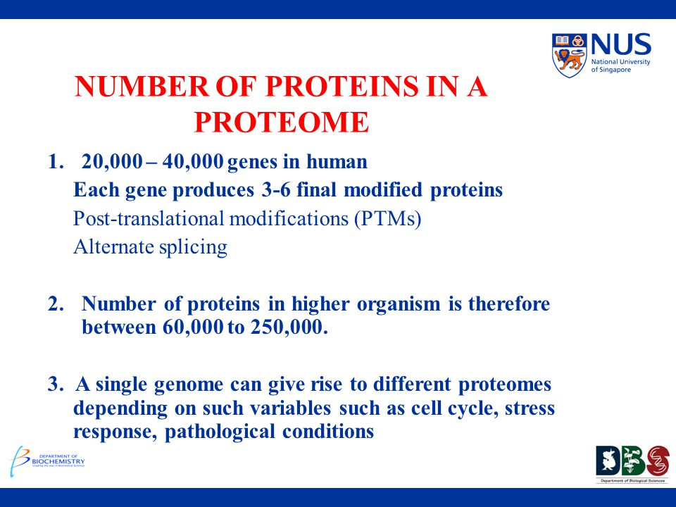NUMBER OF PROTEINS IN A PROTEOME 1.20,000 – 40,000 genes in human Each gene produces 3-6 final modified proteins Post-translational modifications (PTM