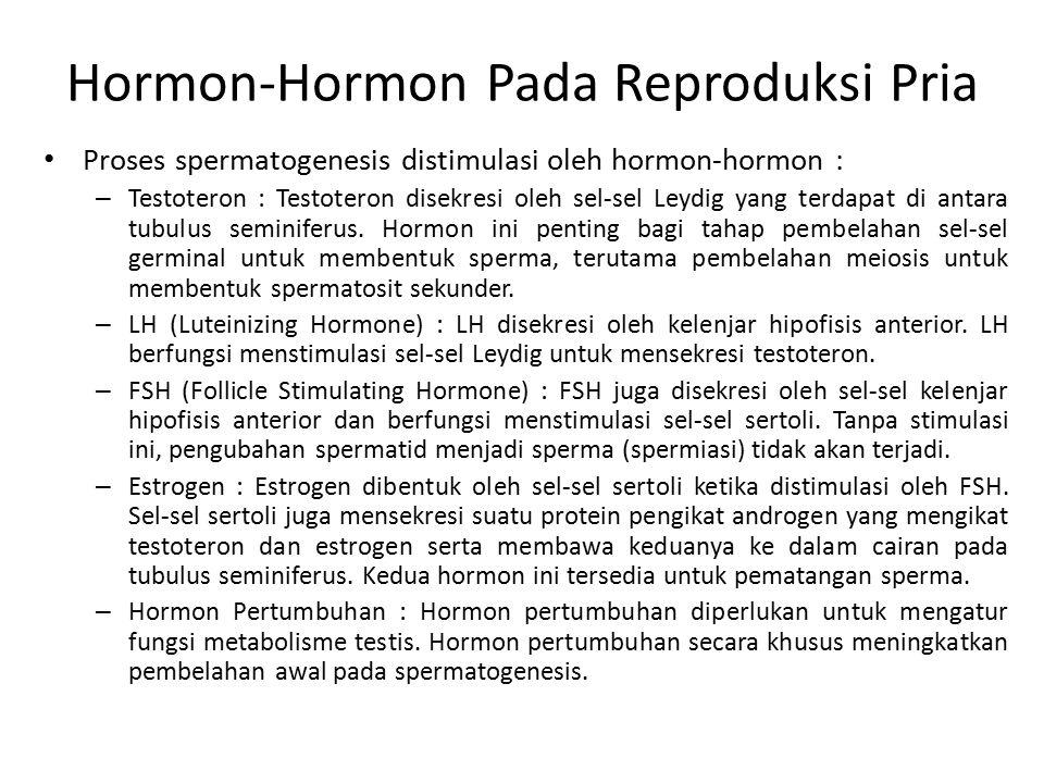 Hormon-Hormon Pada Reproduksi Pria Proses spermatogenesis distimulasi oleh hormon-hormon : – Testoteron : Testoteron disekresi oleh sel-sel Leydig yan