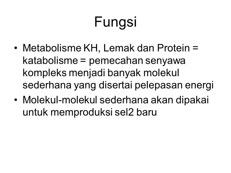 Fungsi Metabolisme KH, Lemak dan Protein = katabolisme = pemecahan senyawa kompleks menjadi banyak molekul sederhana yang disertai pelepasan energi Mo