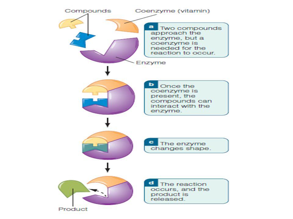 Vitamin B5 asam pantothenat