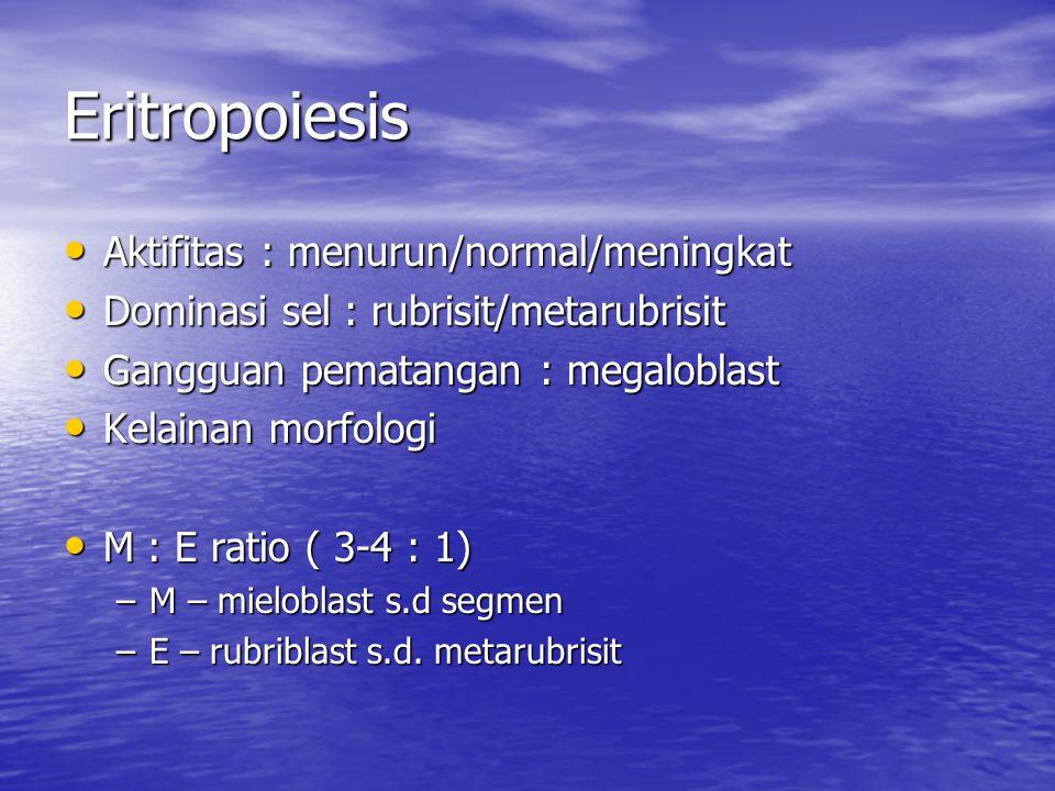 Eritropoiesis Aktifitas : menurun/normal/meningkat Aktifitas : menurun/normal/meningkat Dominasi sel : rubrisit/metarubrisit Dominasi sel : rubrisit/metarubrisit Gangguan pematangan : megaloblast Gangguan pematangan : megaloblast Kelainan morfologi Kelainan morfologi M : E ratio ( 3-4 : 1) M : E ratio ( 3-4 : 1) –M – mieloblast s.d segmen –E – rubriblast s.d.
