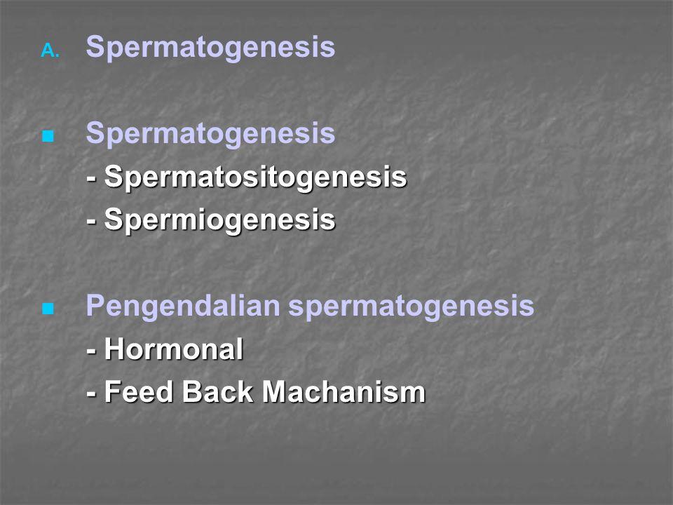 A. A. Spermatogenesis Spermatogenesis - Spermatositogenesis - Spermiogenesis Pengendalian spermatogenesis - Hormonal - Feed Back Machanism