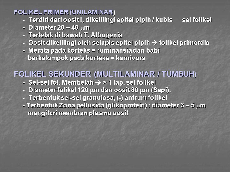 FOLIKEL PRIMER (UNILAMINAR) - Terdiri dari oosit I, dikelilingi epitel pipih / kubis sel folikel - Diameter 20 – 40  m - Terletak di bawah T. Albugen