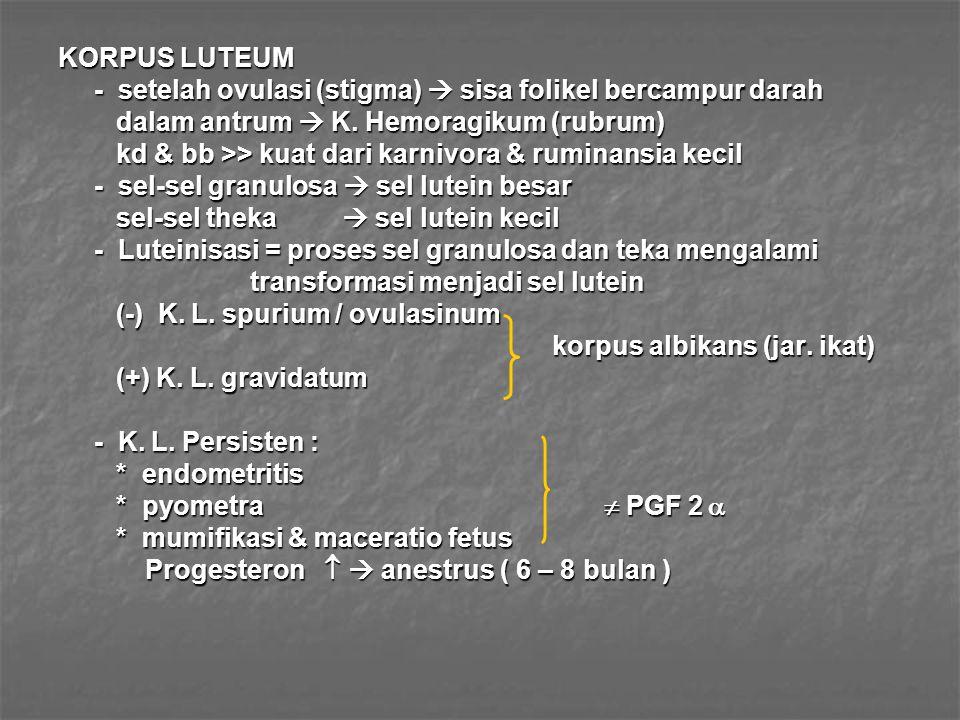 KORPUS LUTEUM - setelah ovulasi (stigma)  sisa folikel bercampur darah dalam antrum  K. Hemoragikum (rubrum) dalam antrum  K. Hemoragikum (rubrum)