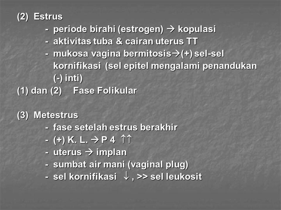 (2) Estrus - periode birahi (estrogen)  kopulasi - aktivitas tuba & cairan uterus TT - mukosa vagina bermitosis  (+) sel-sel kornifikasi (sel epitel