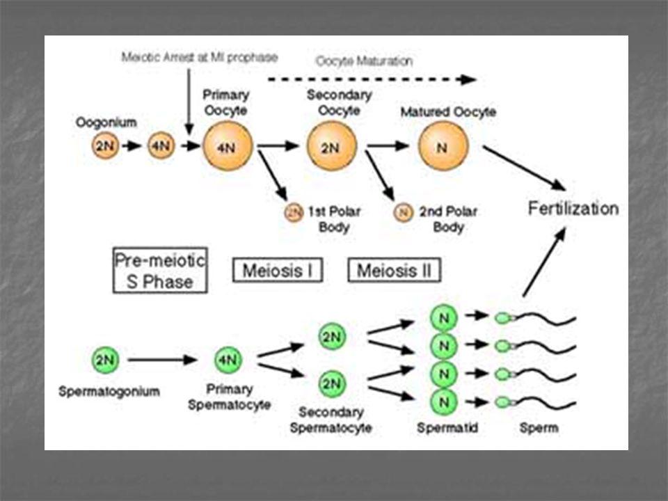 FAKTOR-FAKTOR YANG MEMPENGARUHI SPERMATOGENESIS Obat-obatan Bahan kimiaBahan kimia Sinar rontgenSinar rontgen Trauma mekanisTrauma mekanis PenyakitPenyakit Hormonal - Hipotalamus - Hipofisa - Testis Lingkungan - Temperatur - Dataran Tinggi