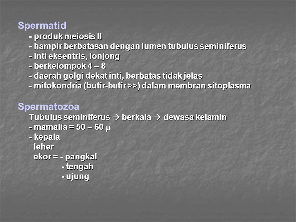 (4) Diestrus - fase terpanjang dari Siklus Birahi  Progesteron >>  Progesteron >> - servik menutup - uterus relaksasi - akhir diestrus  K.L.