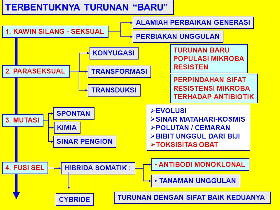 TERBENTUKNYA TURUNAN BARU 1.KAWIN SILANG - SEKSUAL 2.